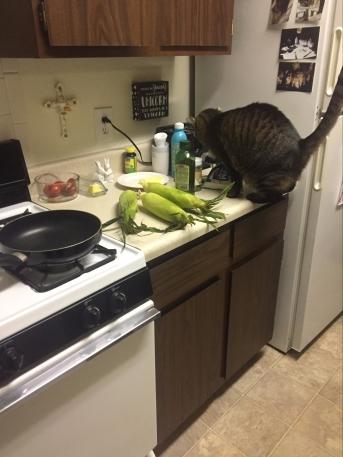 cat counter