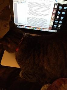 cat help
